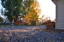 Fall (11)