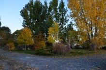 Fall (15)